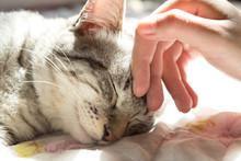 Woman Hand Petting A Cat Head,...