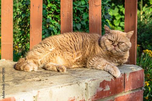 Fotografering  Cat resting