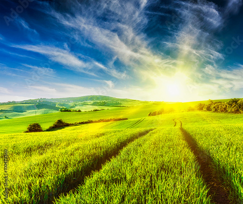 Photo Stands Yellow Rolling summer landscape
