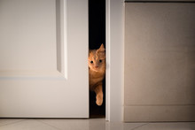 Cat Open And Entering Into A D...