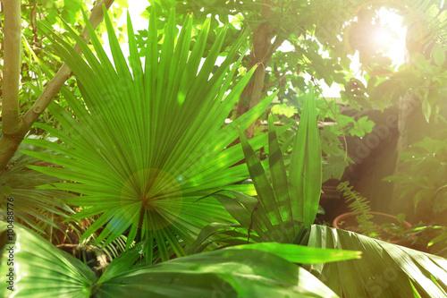 Αφίσα  Plants in greenhouse at botanic garden