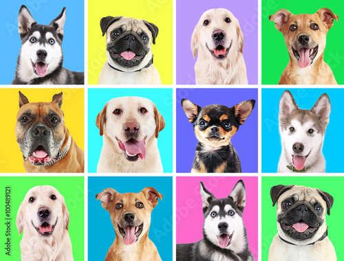 Foto  Portraits of cute dogs on colorful backgrounds