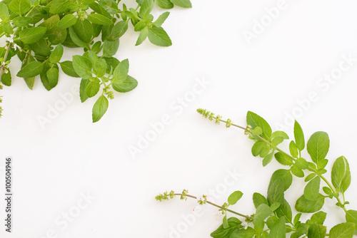 Fotografía  観葉植物