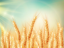 Golden Wheat Field And Sunny Day. EPS 10