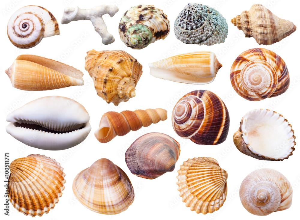Fotografie, Obraz set of various mollusc shells isolated on white
