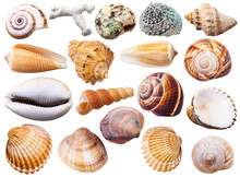 Set Of Various Mollusc Shells ...