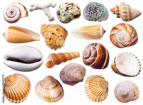 set of various mollusc shells isolated on white Canvas