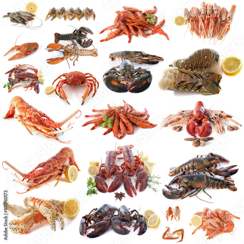 Aluminium Prints Seafoods seafood and shellfish