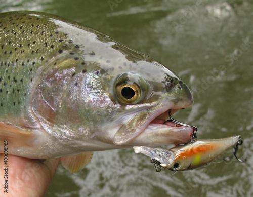 Fotobehang Fishing - rainbow trout