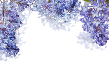 Half Frame From Isolated Blue Lilac Blooms