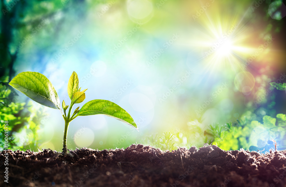 Fototapety, obrazy: Growing Sprout - Beginning Of A New Life