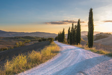 Gravel Road With Cypress Trees At Sunset.