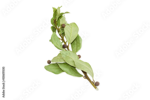 Fototapeta Branch of a bay laurel and several peas allspice obraz