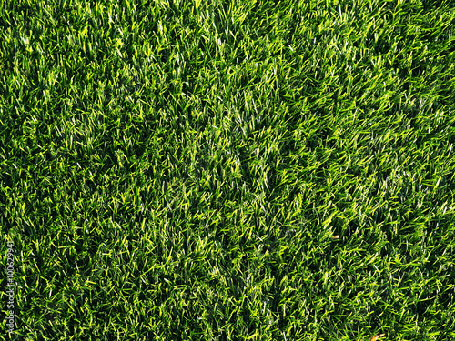 Foto auf Leinwand Gras Green grass for background