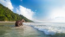 Bathing Elephant On The Tropical Beach Background.