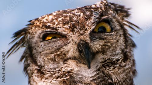 Poster Croquis dessinés à la main des animaux owl eyes