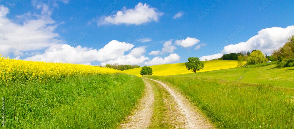 Fototapety, obrazy: Weg im Frühling - Way in springtime