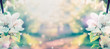 Leinwandbild Motiv Spring blossom over blurred nature background with sunshine, banner. Retro toned