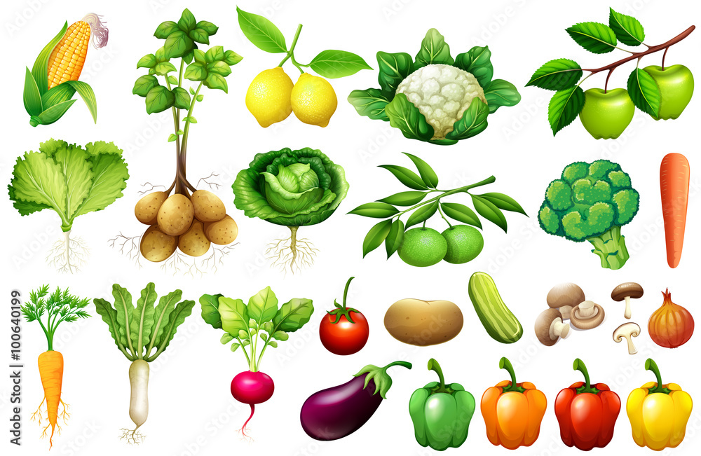 Różne rodzaje warzyw