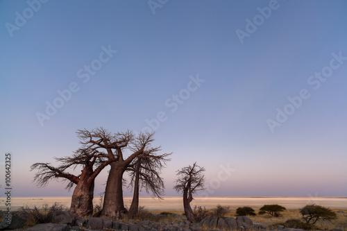 Poster Baobab Baobabs at twilight