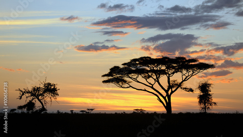 Poster Afrique du Sud Tanzania Parco Serengeti tramonto