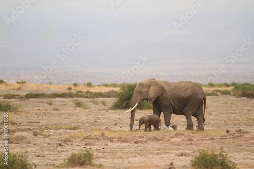 Foto op Aluminium Olifant Amboseli National Park is a sanctuary of elephants near mount kilimanjaro