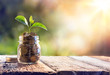 canvas print picture - Plant Growing In Savings Coins - Investment And Interest Concept