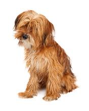 Cute Shaggy Dog Sitting Tilting Head