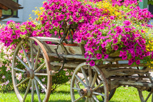 Vintage Wagon Decorated With Annual Flowers III