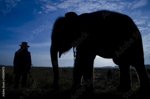 Elephant standing in a rice field with the mahout Canvas Print