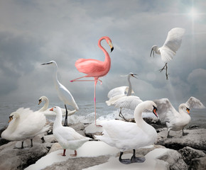 Obraz na PlexiStand out from a crowd - Flamingo and white birds