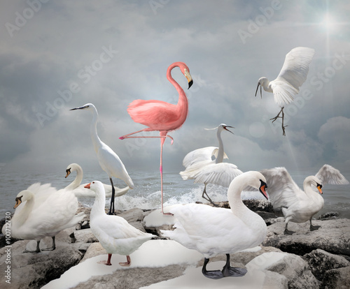 Fotografie, Obraz  Stand out from a crowd - Flamingo and white birds
