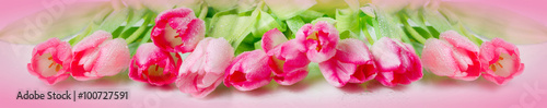 plakat Horizontal panorama with pink tulips on pink background.