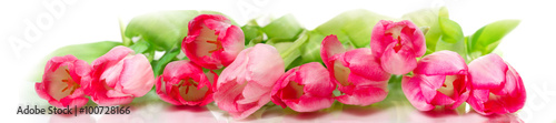 Deurstickers Tulp Horizontal panorama with pink tulips on white background.