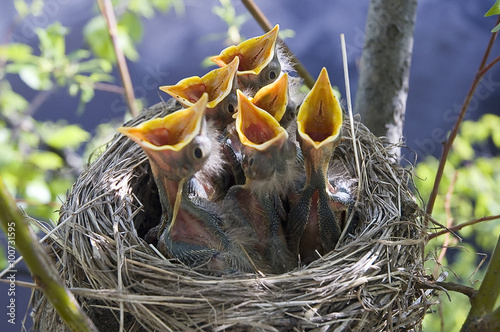 Little children Birds 6