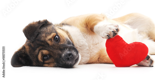 Photo  Dog with heart.