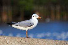 Stand Still Seagull