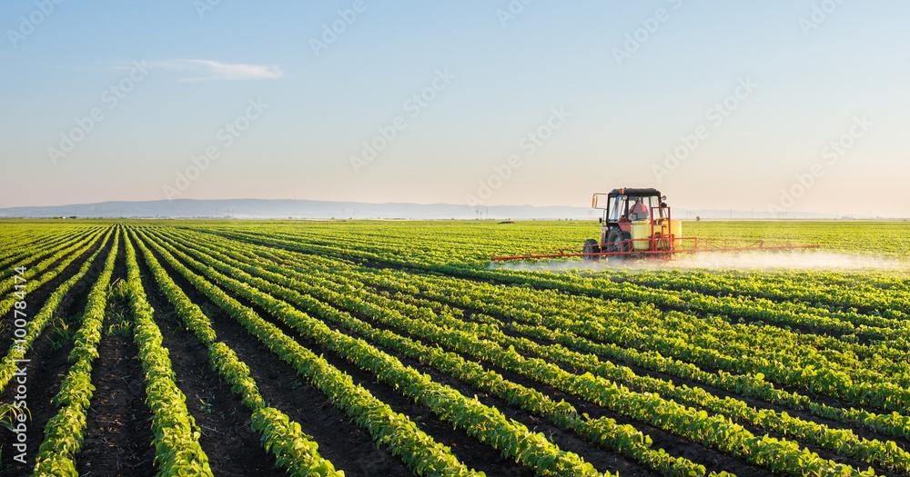 Fototapety, obrazy: Tractor spraying soybean field