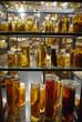 herpetologische Sammlung