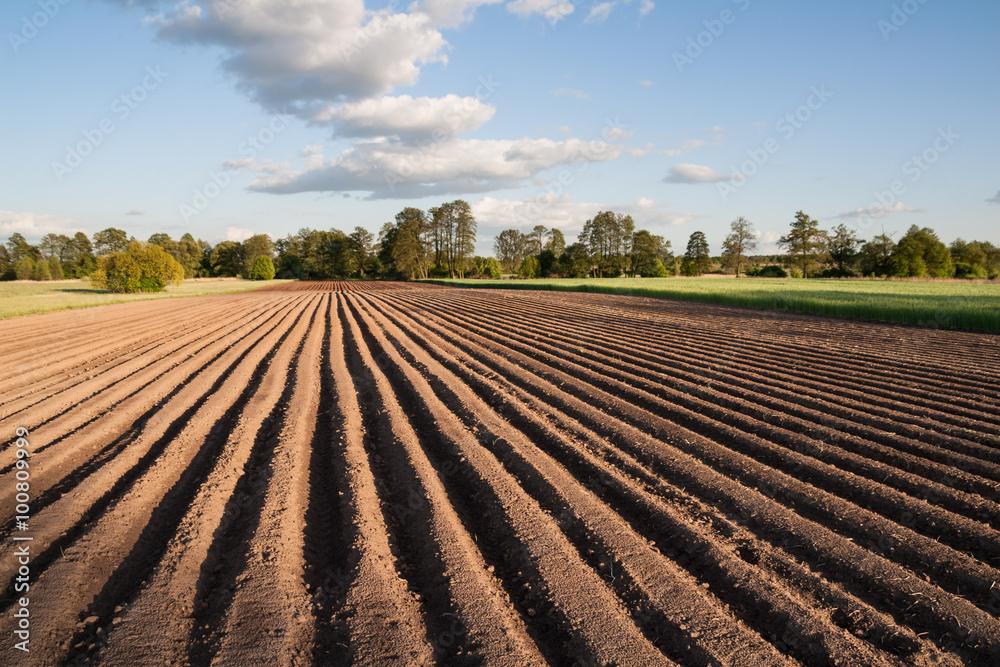 Fototapety, obrazy: Widok na zaorane pole w piękny słoneczny dzień na wsi