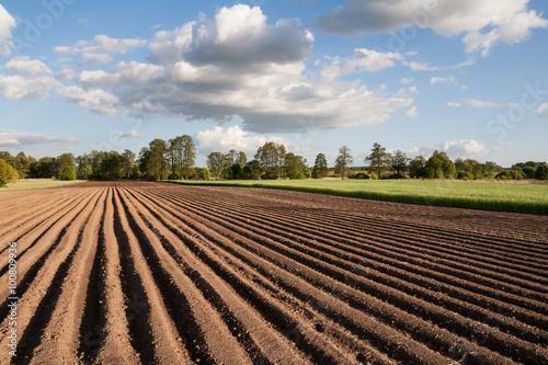 Fototapeta Widok na zaorane pole w piękny słoneczny dzień na wsi obraz