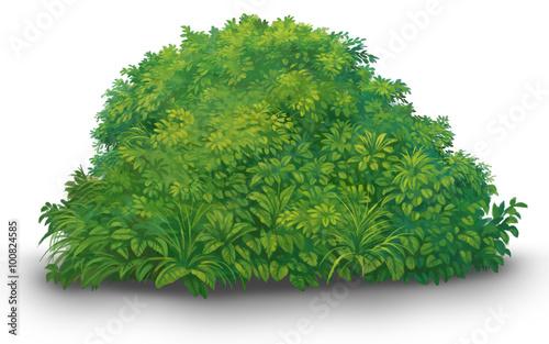 Photo  a tree green bush