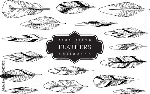 Decorative Feather vector set. Hand-drawn illustration