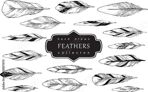Decorative Feather vector set. Hand-drawn illustration