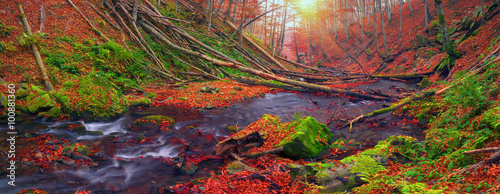 Keuken foto achterwand Lavendel Stream in the forest gold