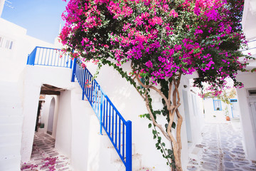 Fototapeta Traditional greek house with flowers in Paros island, Greece