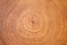 Background Of Wooden Cut Texture