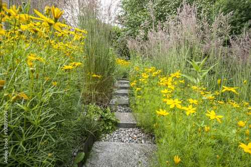 Fotografie, Obraz  flower bed with tickseed and grass
