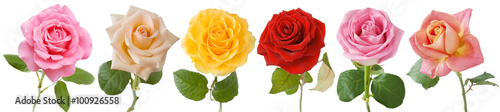 Foto op Aluminium Roses Rose set isolated on white background