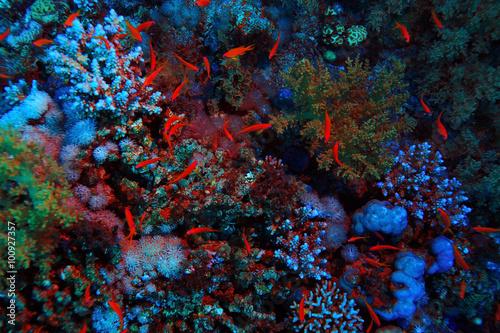 coral reef underwater photo